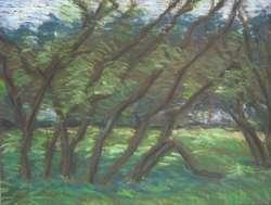 Weiden III, 75 x 60 cm